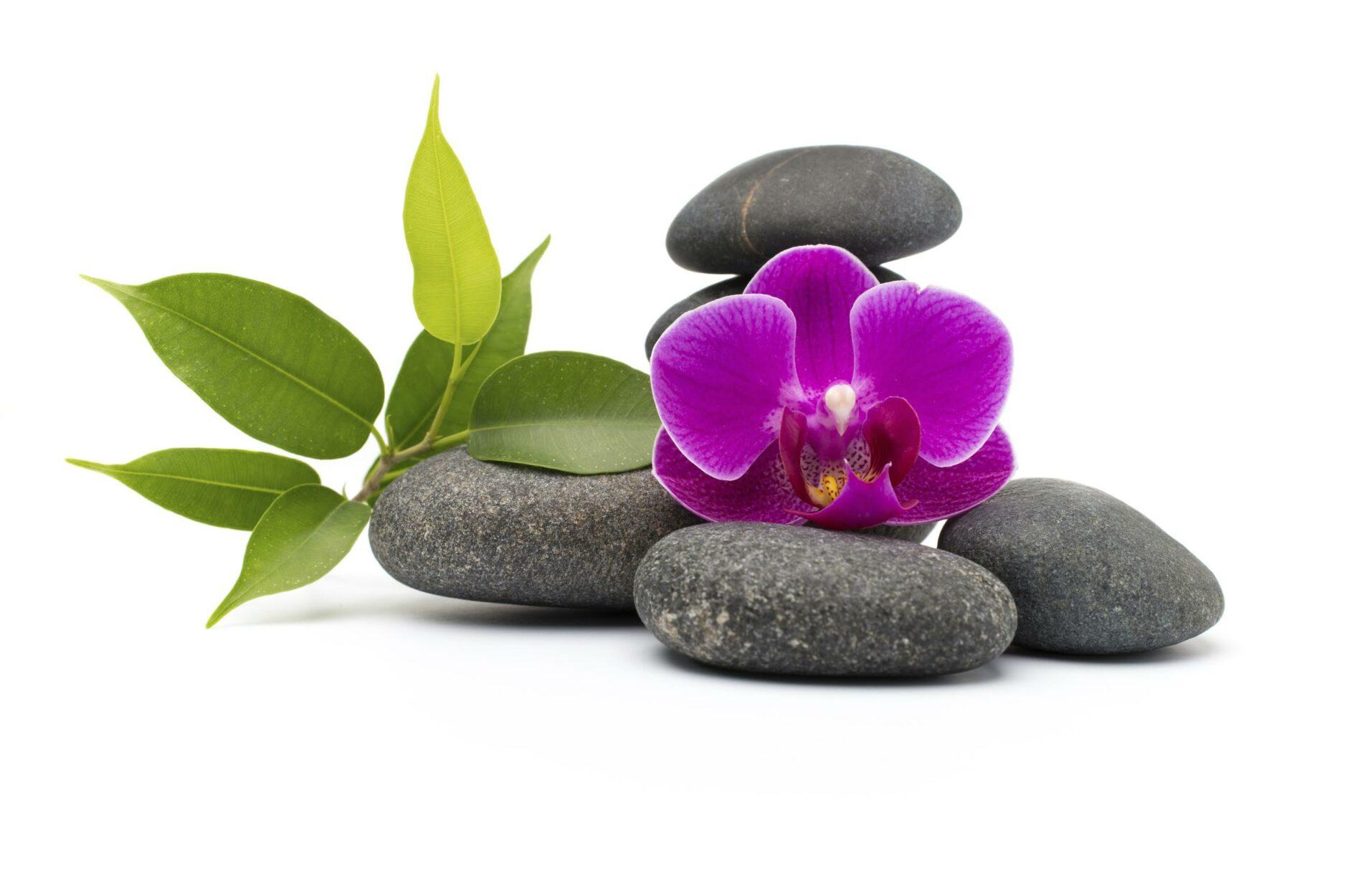 Good Health Goes Beyond Medicine