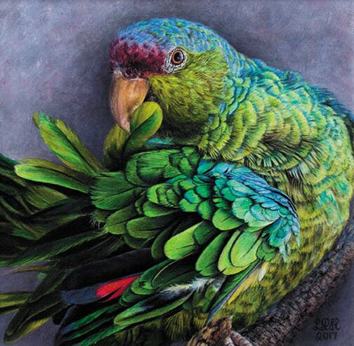 Birds in Art at the Stamford Museum & Nature Center